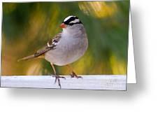 Backyard Bird - White-crowned Sparrow Greeting Card