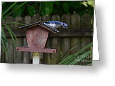 Backyard Blue Jay Greeting Card