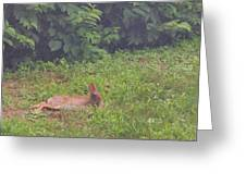 Backyard Bunny Greeting Card