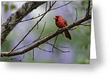 Backyard Cardinal Greeting Card
