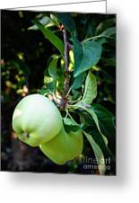 Backyard Garden Series - 2 Apples Greeting Card