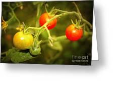 Backyard Garden Series - Cherry Tomatoes Greeting Card