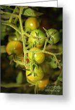 Backyard Garden Series - Green Cherry Tomatoes Greeting Card