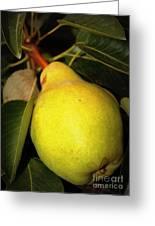 Backyard Garden Series - One Pear Greeting Card