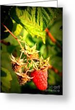 Backyard Garden Series - One Ripe Raspberry Greeting Card