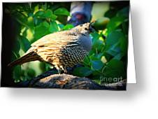 Backyard Garden Series - Quail In A Pear Tree Greeting Card