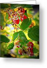 Backyard Garden Series - Sunlight On Raspberries Greeting Card