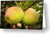 Backyard Garden Series - Two Apples Greeting Card