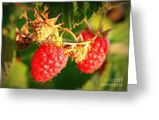 Backyard Garden Series - Two Ripe Raspberries Greeting Card