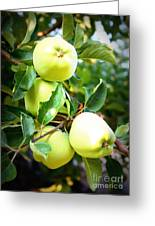 Backyard Garden Series- Golden Delicious Apples Greeting Card