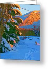 Backyard Glow Greeting Card