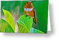 Backyard Hummingbird #22 Greeting Card