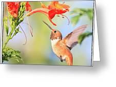 Backyard Hummingbird Series # 54 Greeting Card