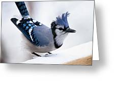 Bad Feather Day Greeting Card