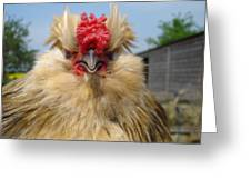 Bad Tempered Bearded Bantam Greeting Card