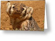 Badger Covered In Dirt From Digging Greeting Card