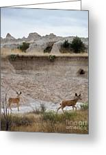 Badlands Deer Sd Greeting Card