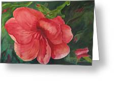 Bahama Beauty Greeting Card