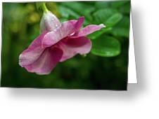 Bahamas Flower Greeting Card