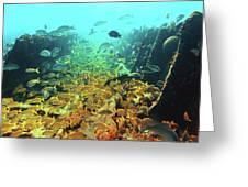 Bahamas Shipwreck Fish Greeting Card
