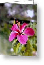 Bahamian Flower Greeting Card