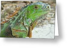 Bahia Honda Iguana Greeting Card