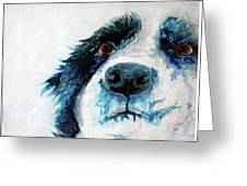 Bailey Our Border Collie Greeting Card