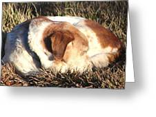 Bailey Resting Greeting Card