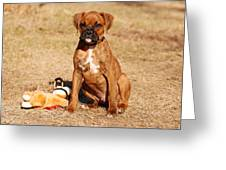 Bailey The Boxer Puppy Greeting Card