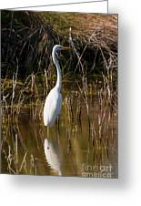 Bailey Tract Egret Two Greeting Card