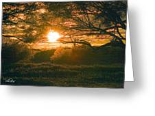 Baja Sunset Greeting Card