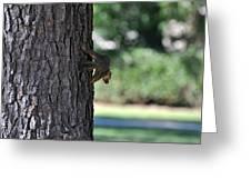 Balancing A Nut Greeting Card