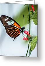 Balancing Act Greeting Card by Andrea  OConnell