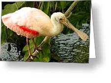 Balancing Act - Roseate Spoonbill Greeting Card