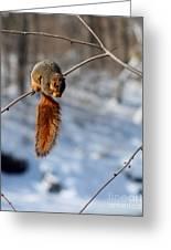 Balancing Squirrel Greeting Card