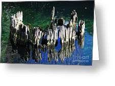 Bald Cypress Stump Greeting Card