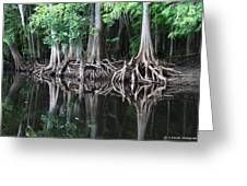 Bald Cypress Trees Along The Withlacoochee River Greeting Card