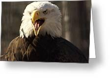Bald Eagle 4 Greeting Card