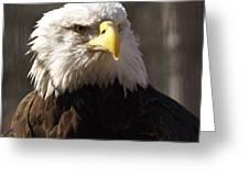 Bald Eagle 5 Greeting Card