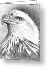 Bald Eagle Greeting Card by Arline Wagner