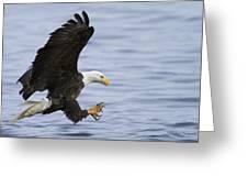 Bald Eagle At Ready Greeting Card
