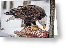 Bald Eagle At The Buffet Greeting Card