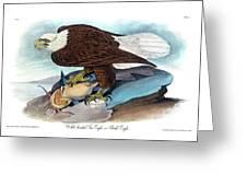 Bald Eagle Audubon Birds Of America 1st Edition 1840 Royal Octavo Plate 14 Greeting Card