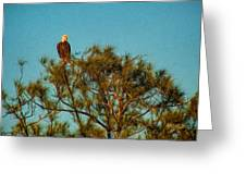 Bald Eagle Burnt Store Marina Florida Greeting Card