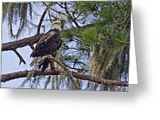 Bald Eagle By H H Photography Of Florida Greeting Card
