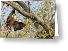 Bald Eagle Catch Of The Day  Greeting Card