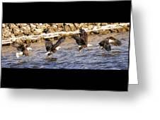 Bald Eagle Fishing Pano Greeting Card