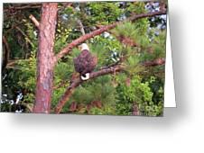 Bald Eagle Fresh Catch Greeting Card