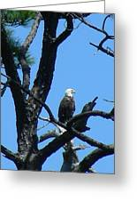 Bald Eagle II Greeting Card
