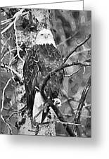 Bald Eagle In Black And White Greeting Card
